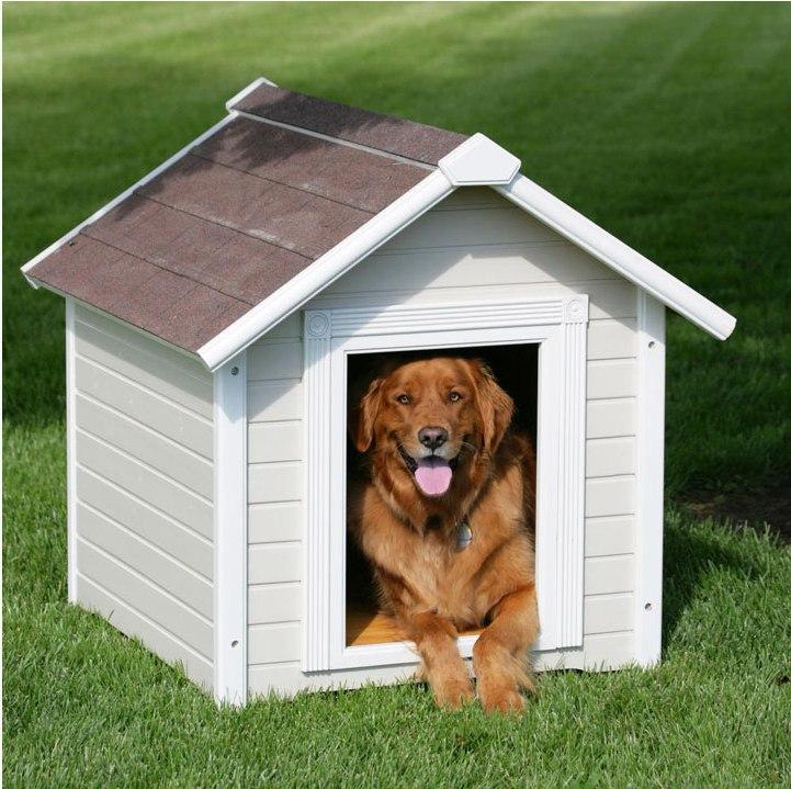 как приручить собаку к будке