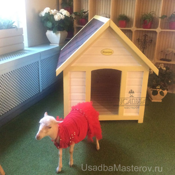 Будка для декоративной козы
