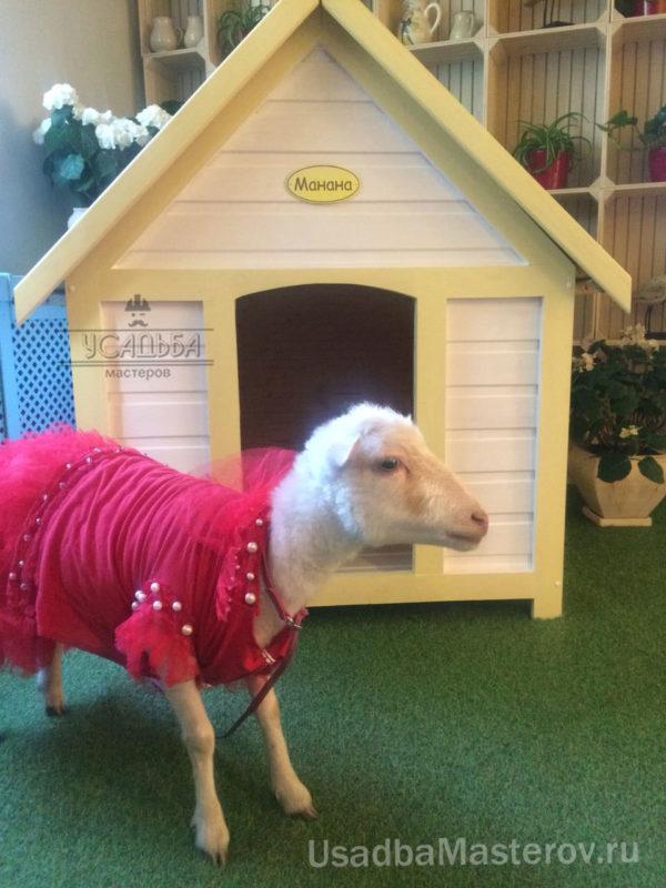 будка для козы декоративной