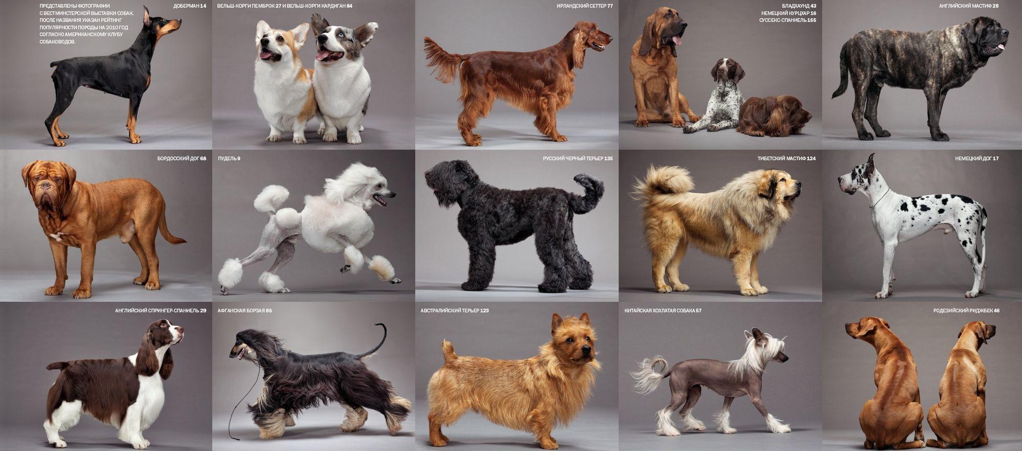 большие маленькие средние породы собак