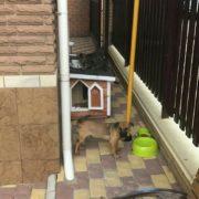 будка для собаки 100х60х60