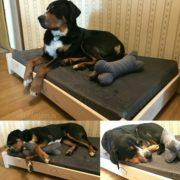 лежанка-для-зенненхунда-гросса-кроватка-для-собаки