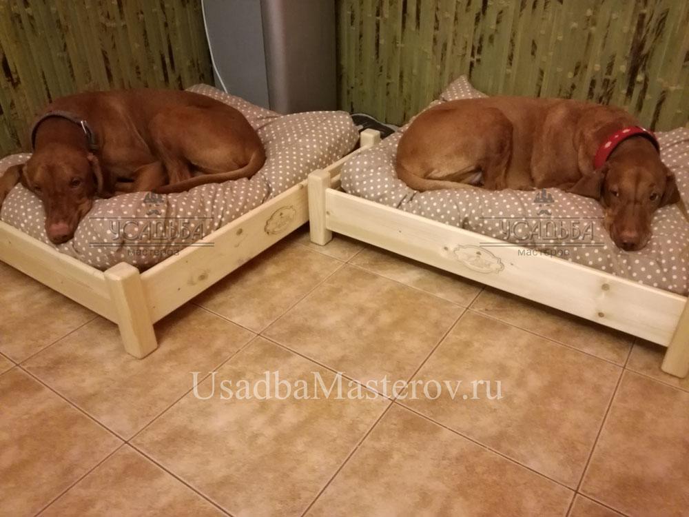 кроватка-для-выжлы-гладкошерстной