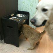 подставка с Мисками для собак и кошек объедененная