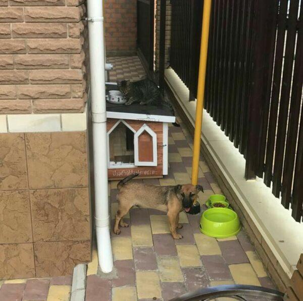 """Утепленная будка для маленькой собаки – """"Питомник №3"""""""