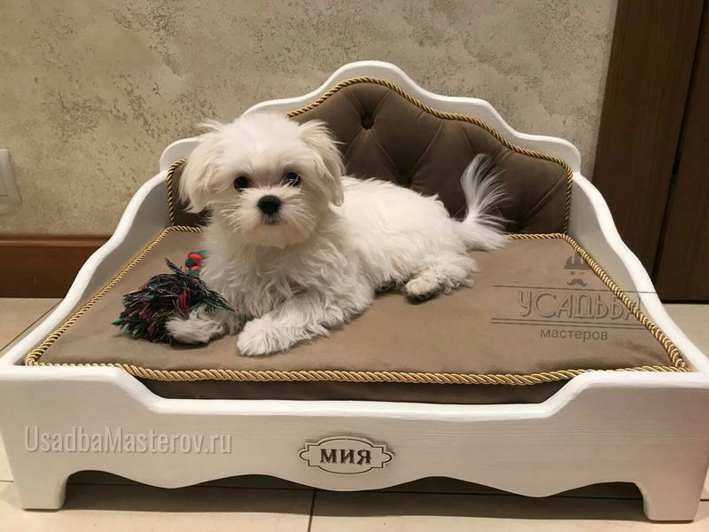 Кроватка для Бишон фризе