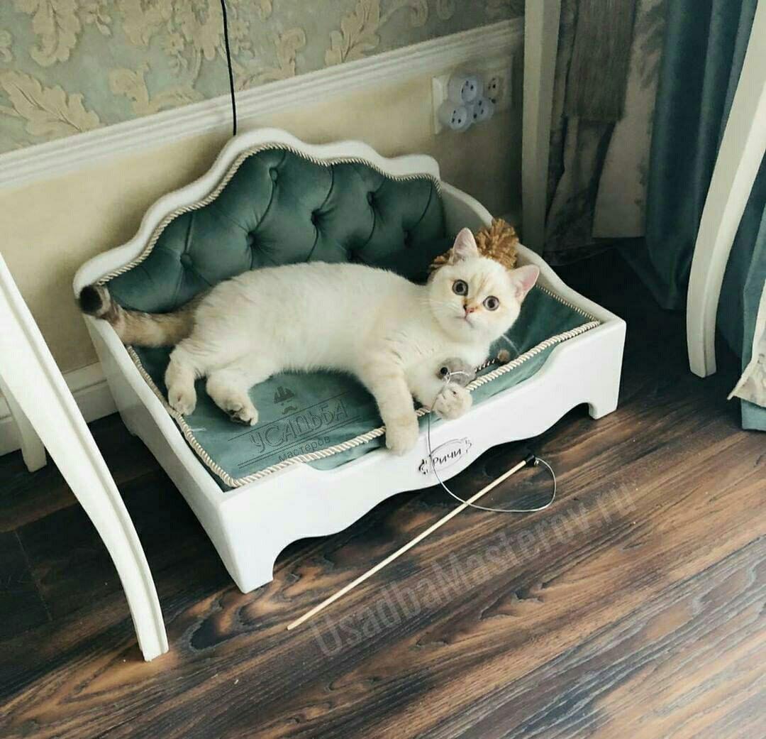 Кроватка-для-вислоухой-кошки-с-мягким-изголовьем