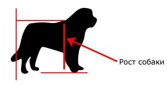 рост собаки