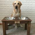 Подставка-с-Мисками-для-собаки