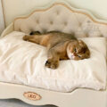 кроватка-для-кошки-вислоухая-усадьба-мастеров